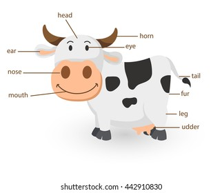 Illustration of cartoon cow vocabulary part of body vector