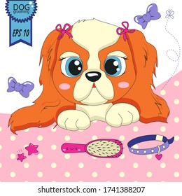 Illustration of Cavalier King Charles Spaniel. Pet care concept. Dog grooming