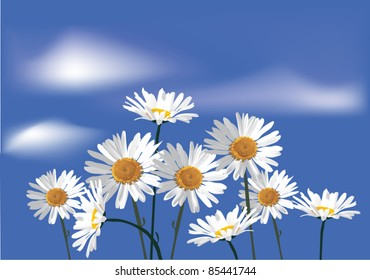 illustration with chamomiles flowers on blue sky background
