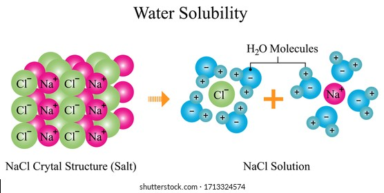 Illustration of chemical. The water solubility of sodium chloride (NaCl) or salt. The salt aqueous solution of hydrated cations and anions formation. Educational chemistry.