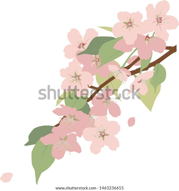 Illustration of cherry blossoms and leafs