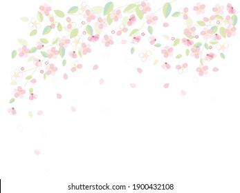 Illustration of cherry blossoms on white background
