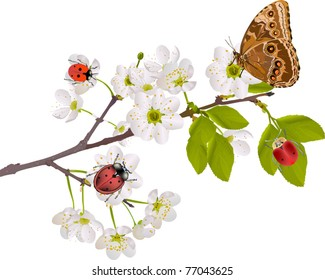 illustration with cherry tree flowers, bugs and butterfly on white background