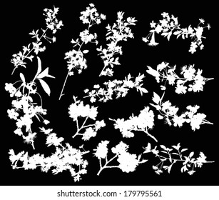 illustration with cherry tree flowers silhouette on black background