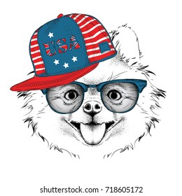 Illustration of chihuahua in the glasses, headphones and in hip-hop hat with print of USA. Vector illustration.