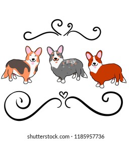 Illustration for children. Lovely furry doggies of welsh corgi. Decorative breeds of dogs. Three funny dogs of different colors.
