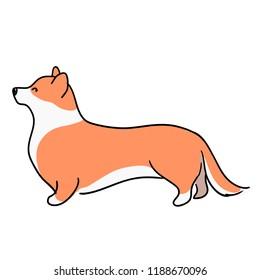 Illustration for children. Lovely ginger and furry dog, breeds of welsh corgi. Decorative breeds of dogs.