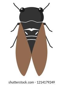 Illustration of Cicada.