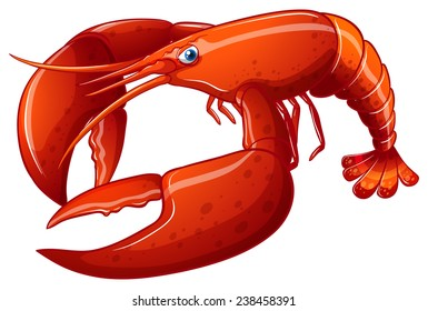 Illustration of a close up lobster