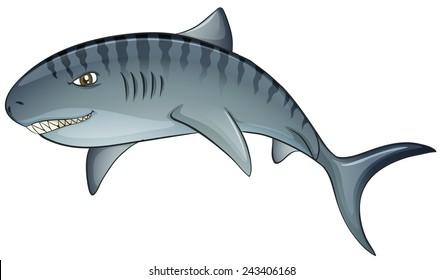 Illustration of a close up tiger shark
