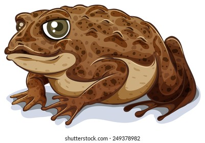 Illustration of a close up toad