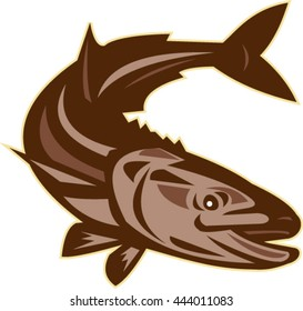 Illustration of a cobia (Rachycentron canadum) or black kingfish, black salmon, ling, lemonfish, crabeater, prodigal son, black bonito, aruan tasek achycentron canadum, diving down retro style.