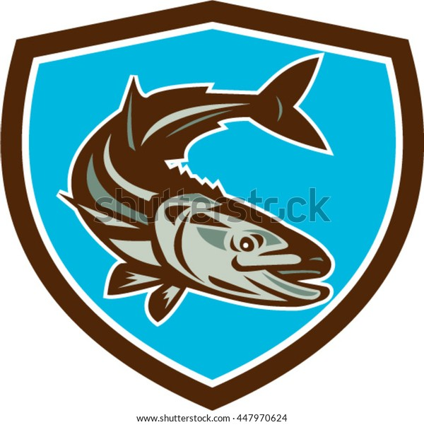 Illustration of a cobia (Rachycentron canadum) or black kingfish, black salmon, ling, lemonfish, crabeater, prodigal son, black bonito, aruan tasek achycentron canadum,  in shield done retro style.
