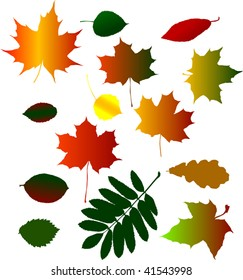 illustration with collection of different fall foliage