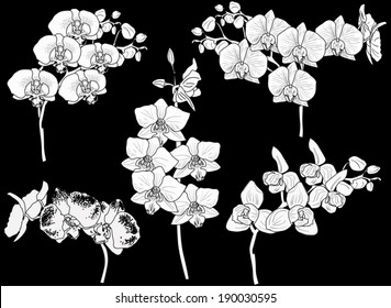 illustration with collection of orchid silhouettes isolated on black background