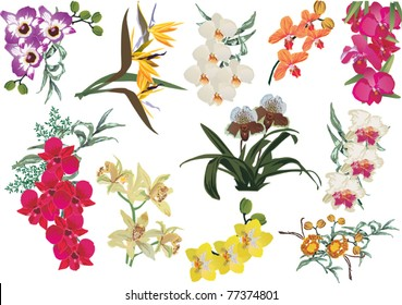 illustration with collection of orchids isolated on white background