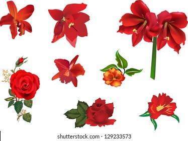illustration with collection of red flowers isolated on white background