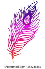 illustration of colorful peacock feather on a white background (vector)