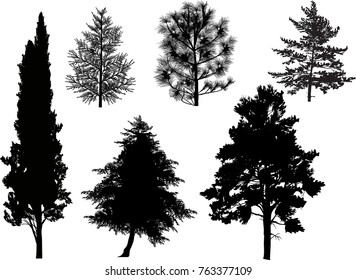 illustration with coniferous tree silhouettes isolated on white background