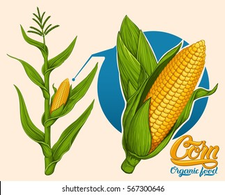 illustration of corn stalk