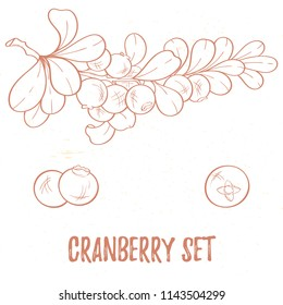 Illustration of cranberry, isolated on white background. Berry elements for invitations, menu, advertising, juice, food, cosmetics or health products. Perfect for cards, invitation, banner or website