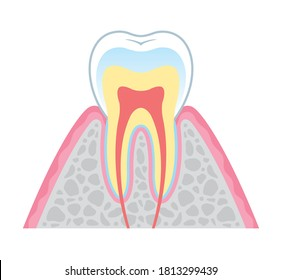 It is an illustration of a cross section of a tooth. Since it is a vector art, it can be edited.