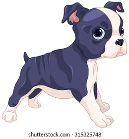 Illustration of cute Boston Terrier cub