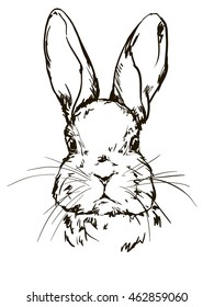 illustration of a cute bunny, rabbit sketch