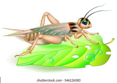 Illustration of cute cricket sitting on a green leaf.  Vector cartoon image.