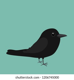 An illustration of a cute crow