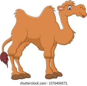 Illustration of cute funny camel on white background