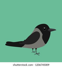 An illustration of a cute hooded crow