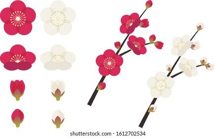 Illustration of cute plum blossom