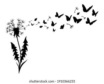 Illustration of dandelion with flying seeds. Silhouette of fluffy flower  with flying butterflies. Nature decorative design. Summer field plants. Black and white illustration of a flower.