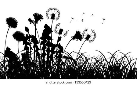 illustration with dandelions in grass silhouettes isolated on white background