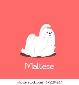 An illustration depicting a cute Maltese dog cartoon.vector