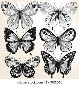 Illustration with  detailed hand drawn  vector butterflies