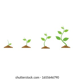 Illustration diagram of stages of plant growth. Vector illustration with a white background