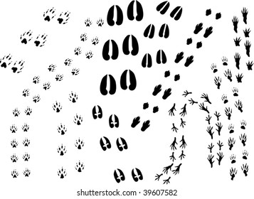 illustration with different animal tracks isolated on white