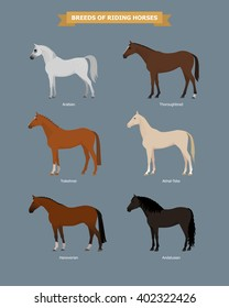 Illustration of different breeds of horses. Horse breeds poster. Farm animals. Horse Vector illustration. Arabian horse, Thoroughbred horse, Akhal-Teke horse, Trakehner, Hanoverian, Andalusian horse.