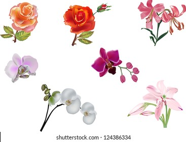 illustration with different flowers collection isolated on white background