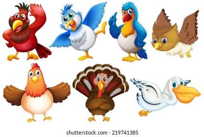 Illustration of different kind of birds