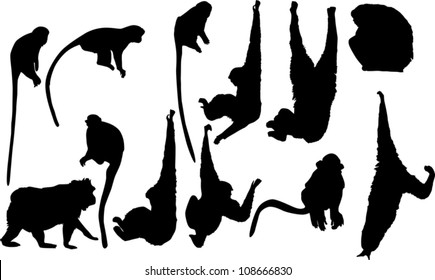 illustration with different monkey silhouettes isolated on white background