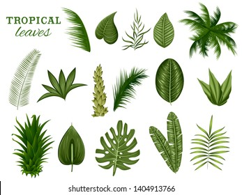 illustration of different tropical leaf for Summer time poster wallpaper for fun party invitation banner template
