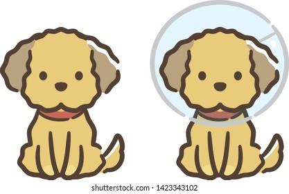 Illustration of Dog with elizabethan collar.