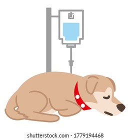 Illustration of a dog giving a drip on a white background