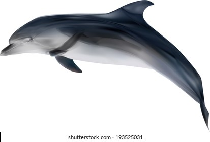 illustration with dolphin isolated on white background