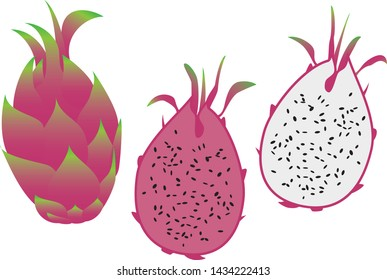 Illustration of dragon fruits (tropical fruits)