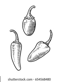 jalapeños illustration, drawing, engraving, ink, line art, vector