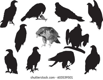 illustration with eagles isolated on white background
